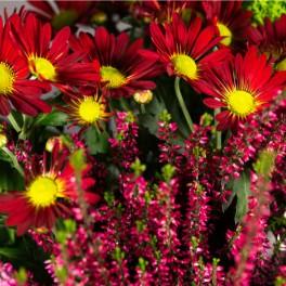 Coupe de plantes de saison