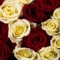 Roses mixtes